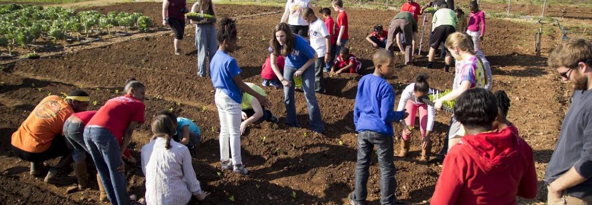 Volunteers in a garden